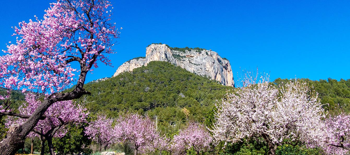 montana-alaro-LivingBlue-Mallorca.jpg