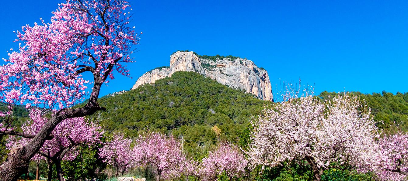 alaro-montanaLivingBlue-Mallorca.jpg